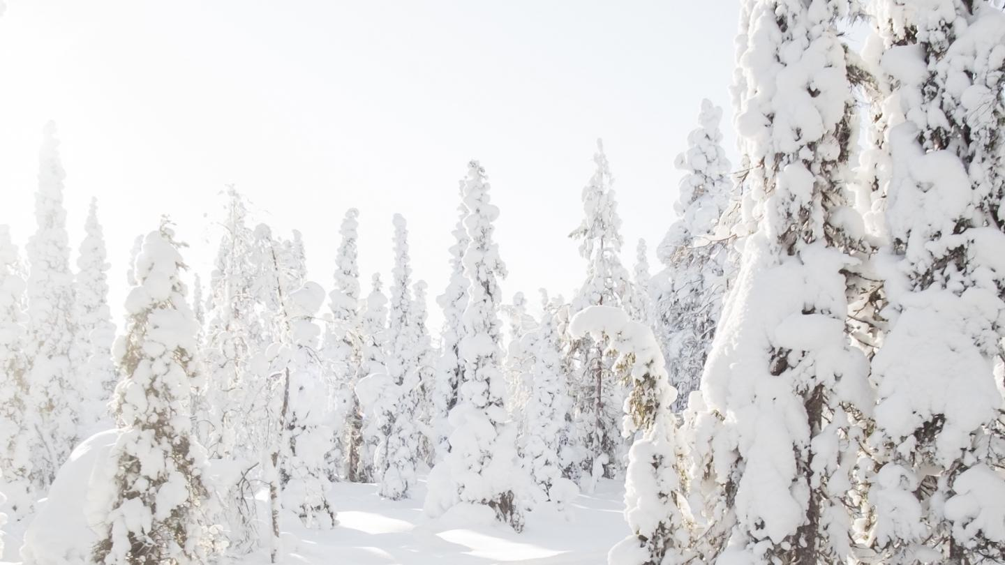 snowed-tree-lapland
